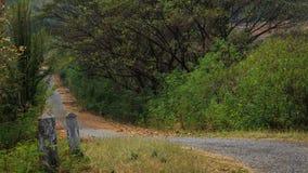 Weg aan de wildernis Stock Foto's