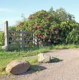 Weg aan geheime tuin met poorten stock afbeelding