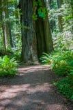 Weg aan grote boom met gat Stock Foto's
