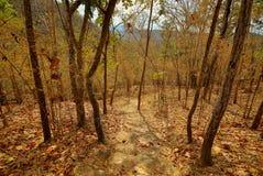 Weg aan het bos Stock Afbeelding
