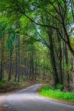 Weg aan het diepe bos Stock Afbeelding