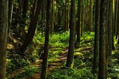 Weg aan het hout waar het zonlicht door de bladeren glanst royalty-vrije stock foto's