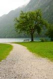 Weg aan het meer Stock Afbeeldingen