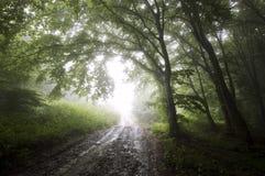 Weg aan lichte trog een geheimzinnig bos met mist stock foto's