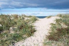 Weg aan strand in Denemarken stock afbeelding