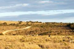 Weg - Addo Landscape Lizenzfreie Stockfotografie