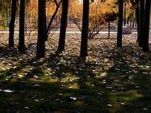Weg & bomen stock afbeelding