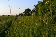 Weg auf dem Feld Stockfoto
