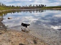 Weg auf dem Fluss Lizenzfreies Stockfoto