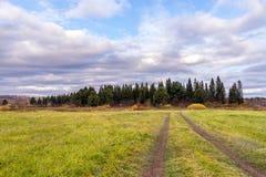 Weg auf dem Gebiet, das zu den Wald führt Stockbild
