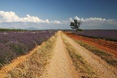 Weg auf dem Gebiet und dem Baum Provence, Frankreich lizenzfreies stockbild