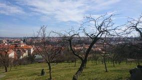 Weg auf dem Vorstadtwald Lizenzfreie Stockbilder