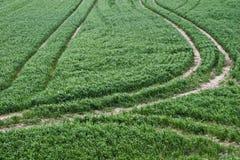 Weg auf einem grünen Gebiet des Grases Stockfoto