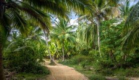 Weg auf einem Palme-Wald - natürlicher Nationalpark Tayrona, Kolumbien Lizenzfreie Stockbilder
