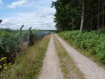 Weg auf einem Waldweg Stockbilder