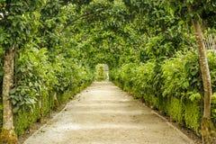 Weg bedeckt durch Bäume und Büsche Stockbild