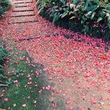 Weg bedeckt mit den Blumenblättern Stockfoto