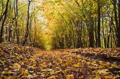 Weg bedeckt mit Laub im Herbstwald lizenzfreie stockbilder