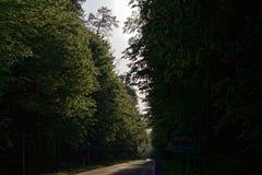 Weg in Bialowieza in Polen Royalty-vrije Stock Afbeelding