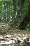 Weg in Bieszczady Stock Foto's