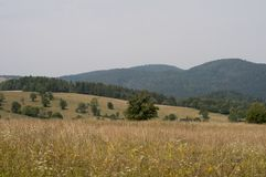 Weg in Bieszczady Royalty-vrije Stock Foto's