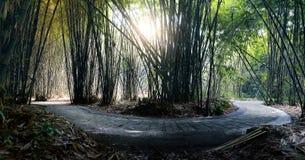 Weg bij Bamboebos in Penglipuran-Dorp Bali Stock Afbeeldingen