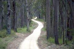Weg binnen aan het bos stock afbeeldingen