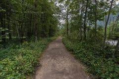 Weg binnen het bos Royalty-vrije Stock Foto's