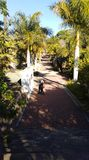 Weg binnen van Botanische Tuin royalty-vrije stock afbeelding