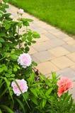 Weg in bloeiende tuin Stock Fotografie