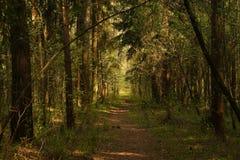 Weg in bos Stock Afbeeldingen