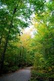 Weg in bos Stock Foto