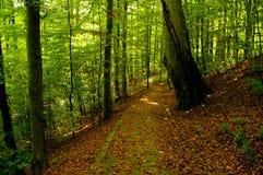 Weg in bos Stock Afbeelding