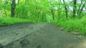 Weg in bos stock footage