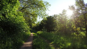 Weg in bos stock videobeelden