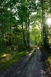 Weg in bos Royalty-vrije Stock Afbeeldingen