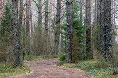 Weg in bos bij daling stock fotografie