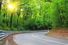 Weg in bos in de lente met zonnestraal stock fotografie