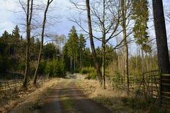Weg in Bos, Tsjechische Republiek, Europa Stock Foto