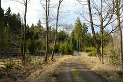 Weg in Bos, Tsjechische Republiek, Europa Royalty-vrije Stock Foto