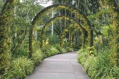 Weg botanischer Gärten Singapurs Stockfotografie