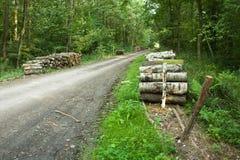 Weg in de bos en boomlogboeken stock foto's