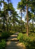 Weg in de bossen Stock Afbeelding