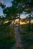 Weg in de duinen tussen bomen Stock Foto