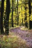 Weg in de herfst stock foto's