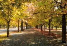 Weg in de herfst Stock Afbeeldingen