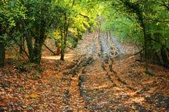 Weg in de herfstbos Stock Afbeelding