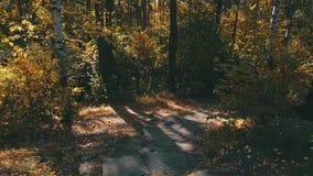 Weg in de herfstbos stock video