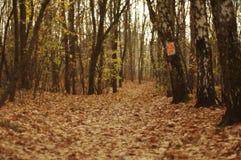 Weg in de herfstbos stock fotografie