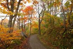 Weg in de herfstbos Stock Afbeeldingen